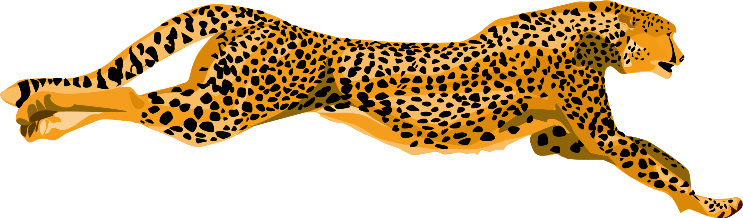 Cheetahs drawing leopard. Cheetah jaguar felidae lion