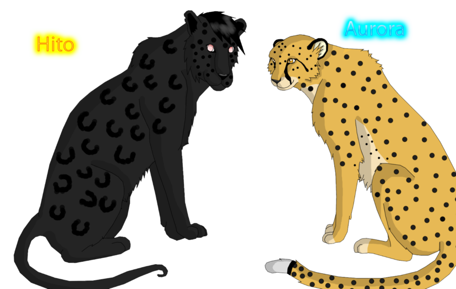 Cheetahs drawing leopard. Black x cheetah by