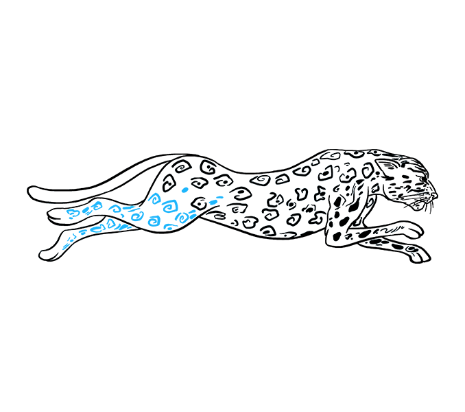 Drawing cheetah ink. Drawings images group with