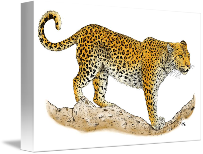 Cheetahs drawing pen and ink. Leopard by roger hall