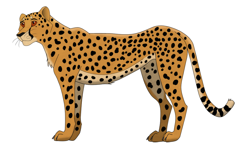 Cheetahs drawing side view. Cheetah by lightning no