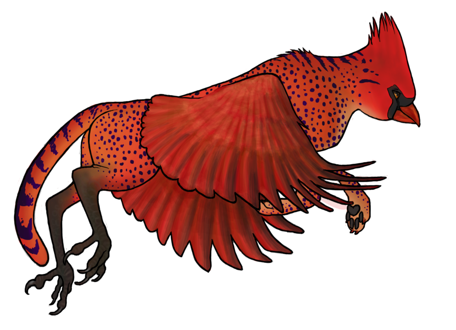 Cheetahs drawing wing. Closed cheetah cardinal gryphon