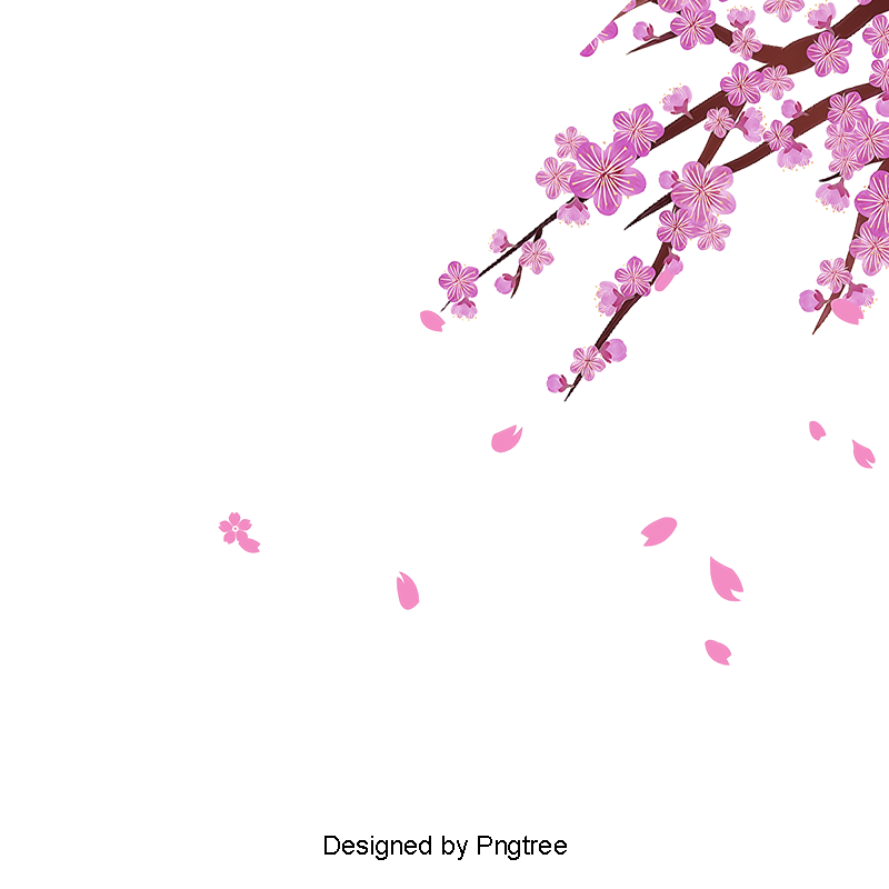 Cherry blossom border png. Vector blossoms flower and