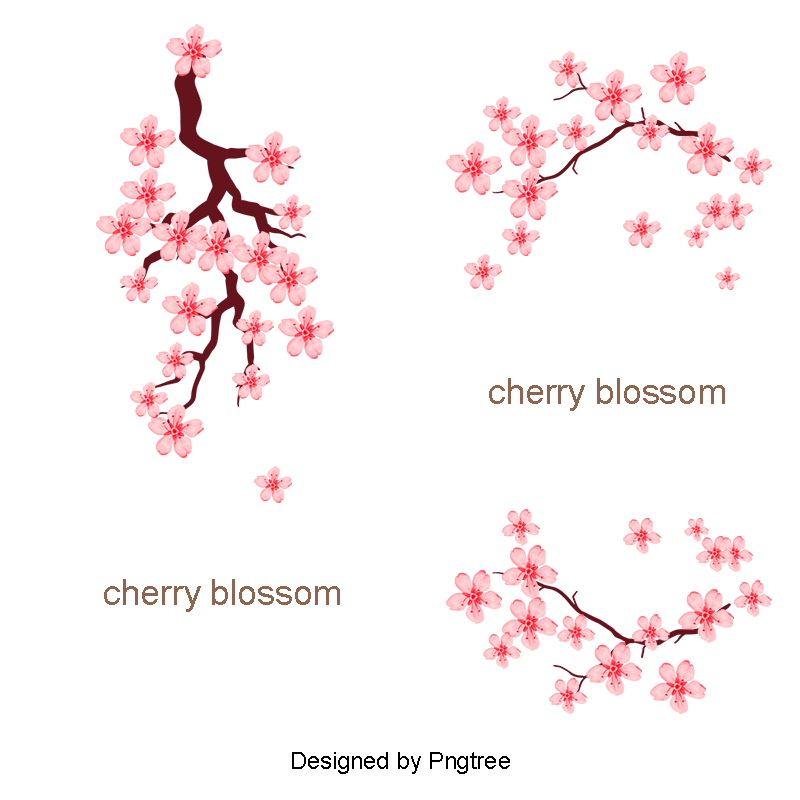 Cherry blossom vector png. Pink romantic blossoms material