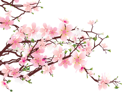Image clip art http. Cherry blossom border png picture freeuse library