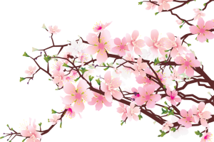 Cherry blossom border png. Image related wallpapers