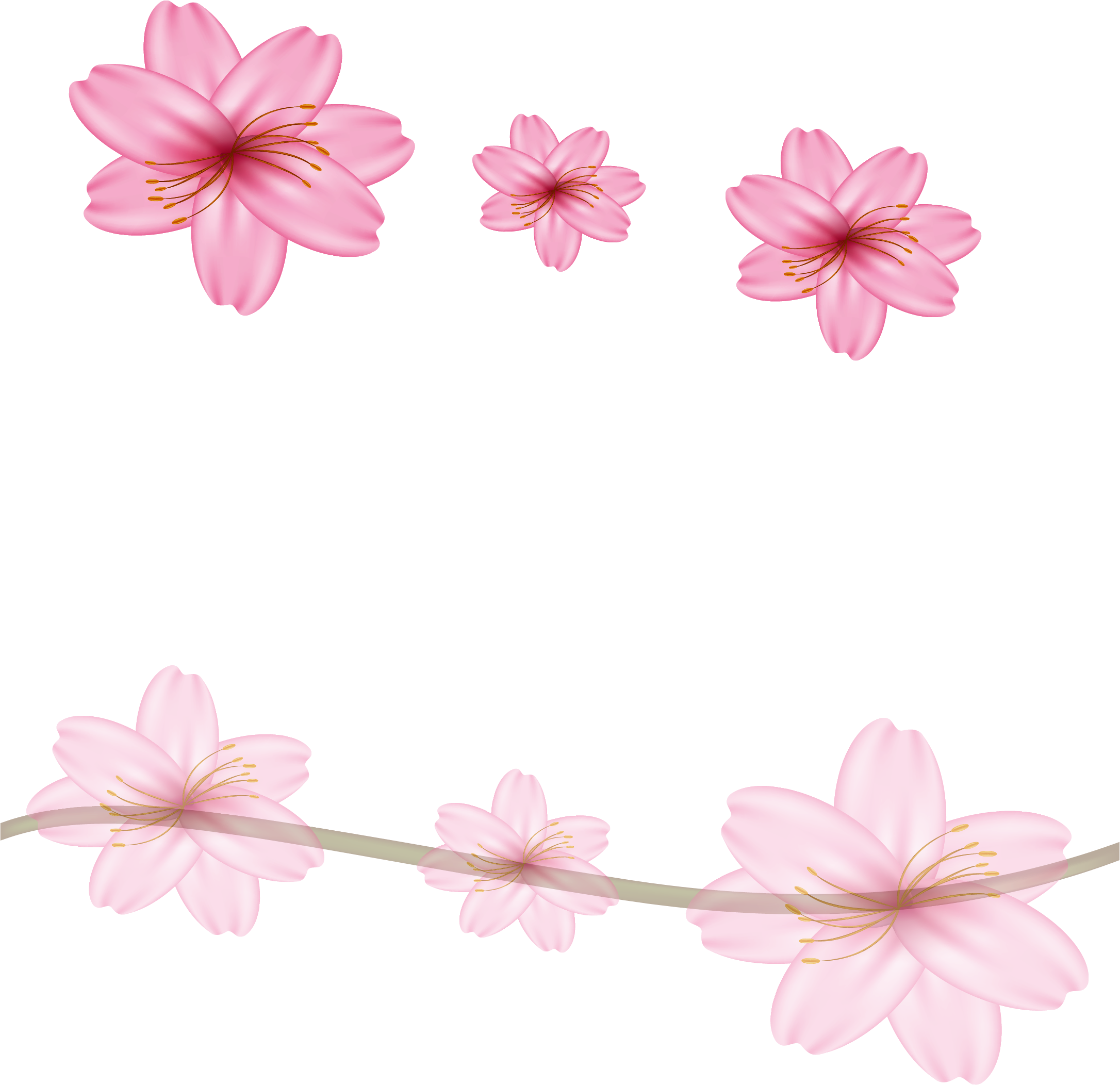 Cherry blossom border png. Floral design flower pink