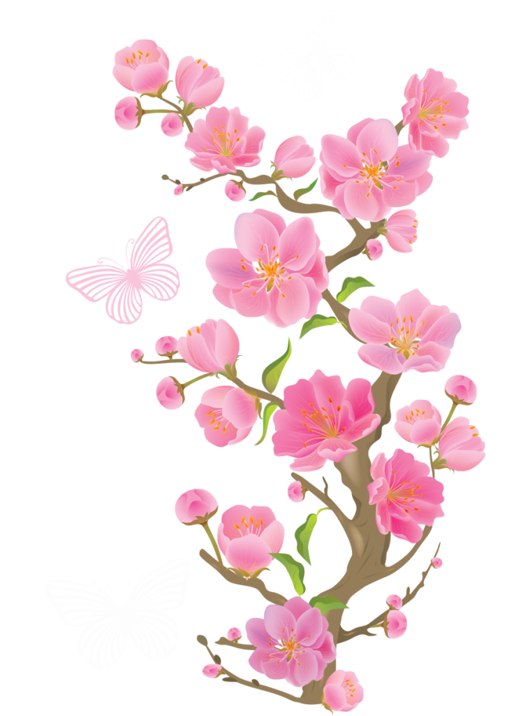 Cherry blossom vector png. Spring blossoms with butterflies
