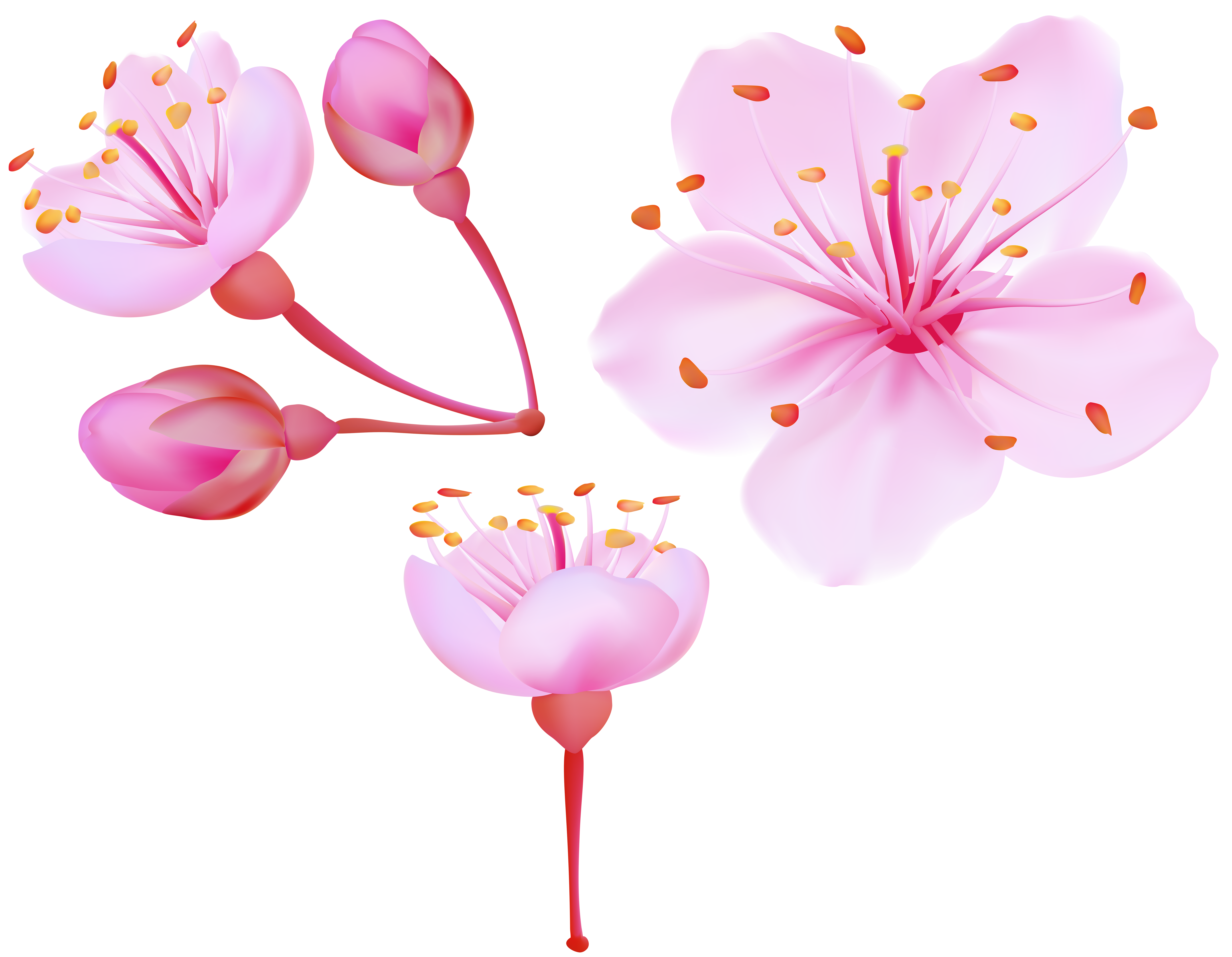 Spring blossoms clip art. Cherry blossom png png freeuse