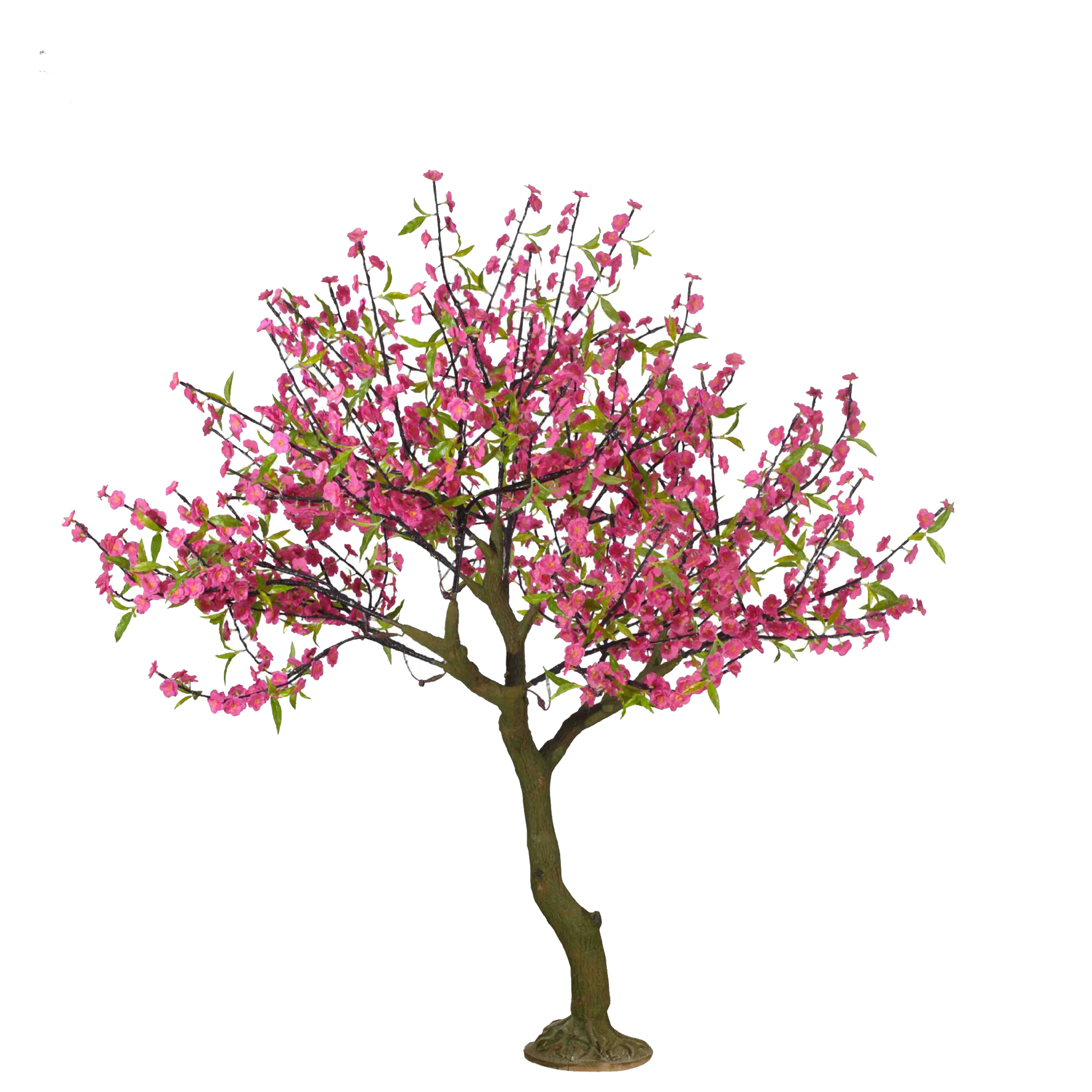 Drawing peach cartoon hand. Cherry blossom tree branch png library