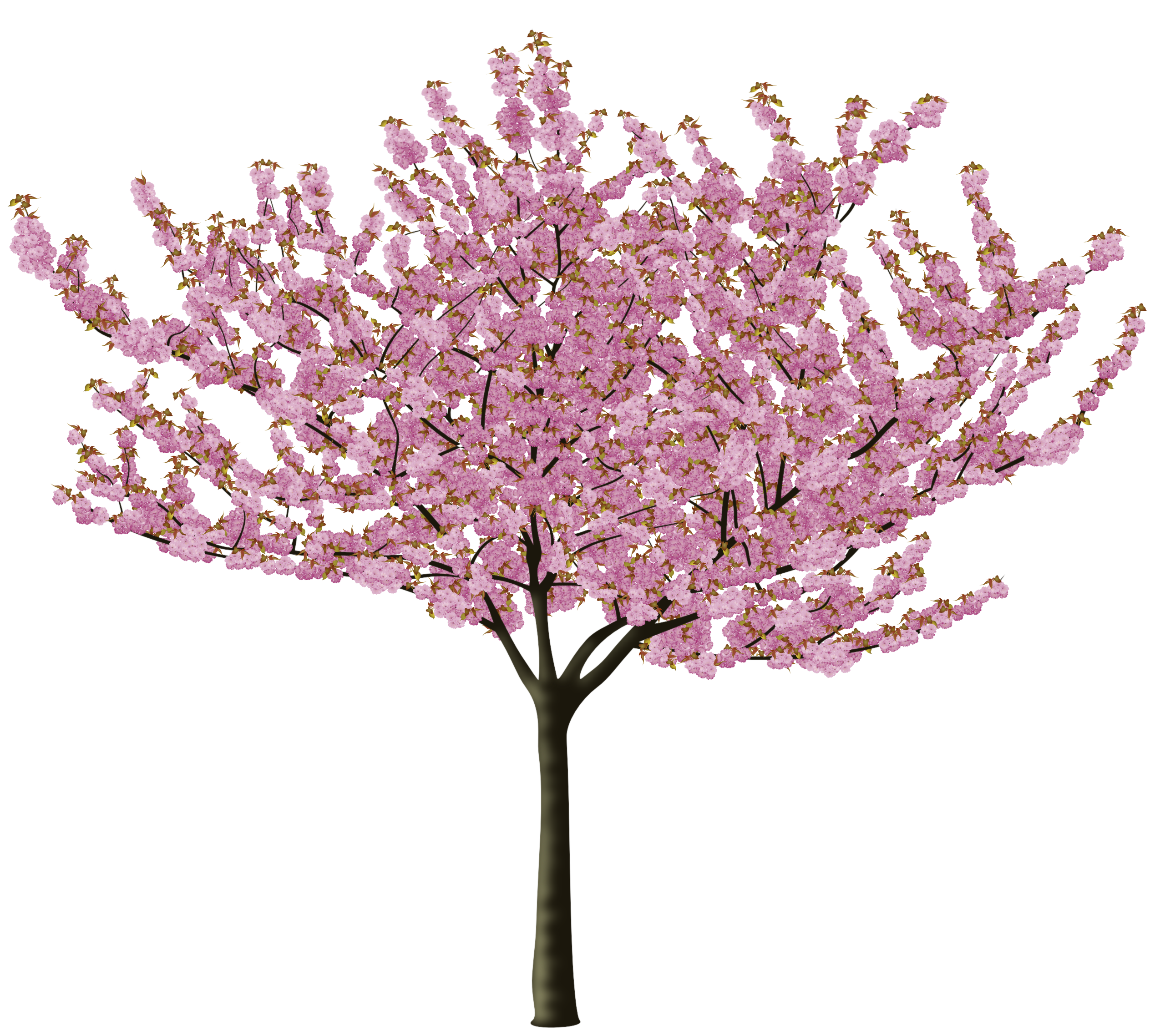 Cherry blossom tree branch png. Format images of free