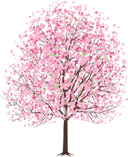 Cherry blossom tree png. Hd transparent the