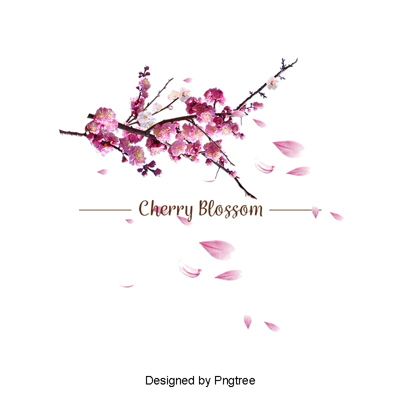 Cherry blossom vector png. Hand painted blossoms and
