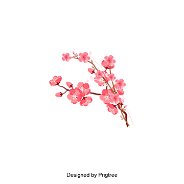 Cherry blossom vector png. Peach branches flowers blossombranchesflowerspeachblossompeach