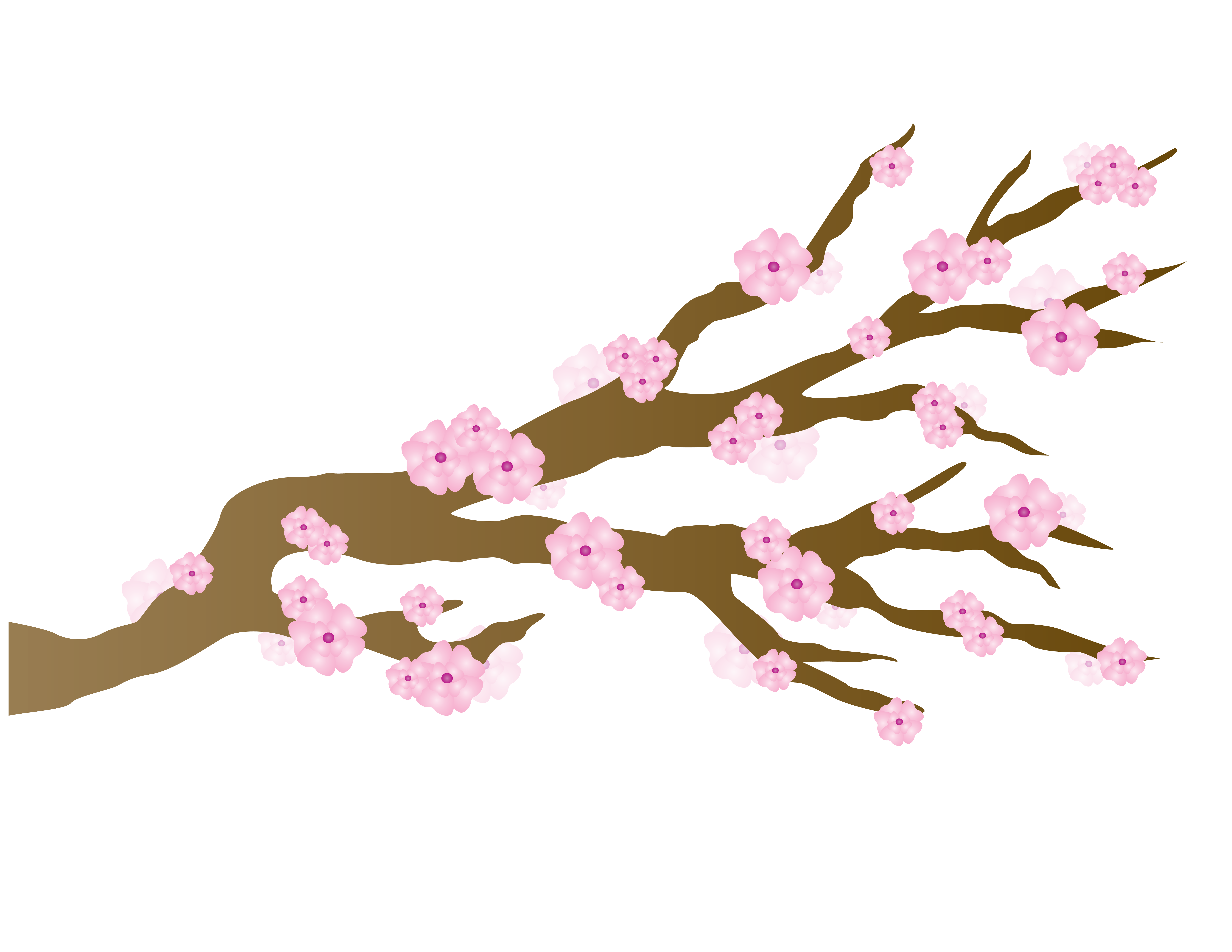 Cherry blossom vector png. Pink blossoms japanese draft