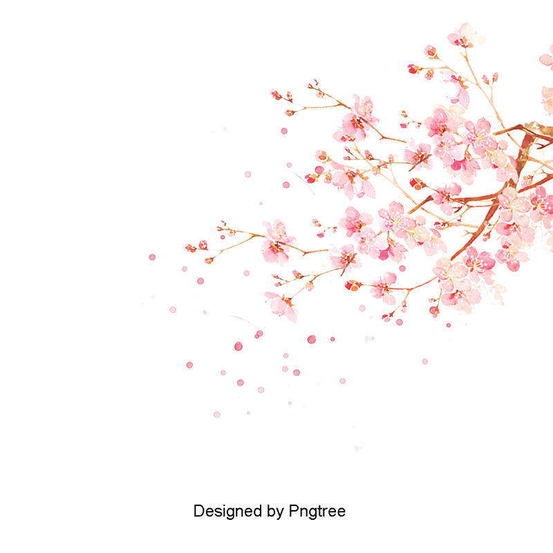 Cherry blossom vector png. Watercolor japanese blossoms japan
