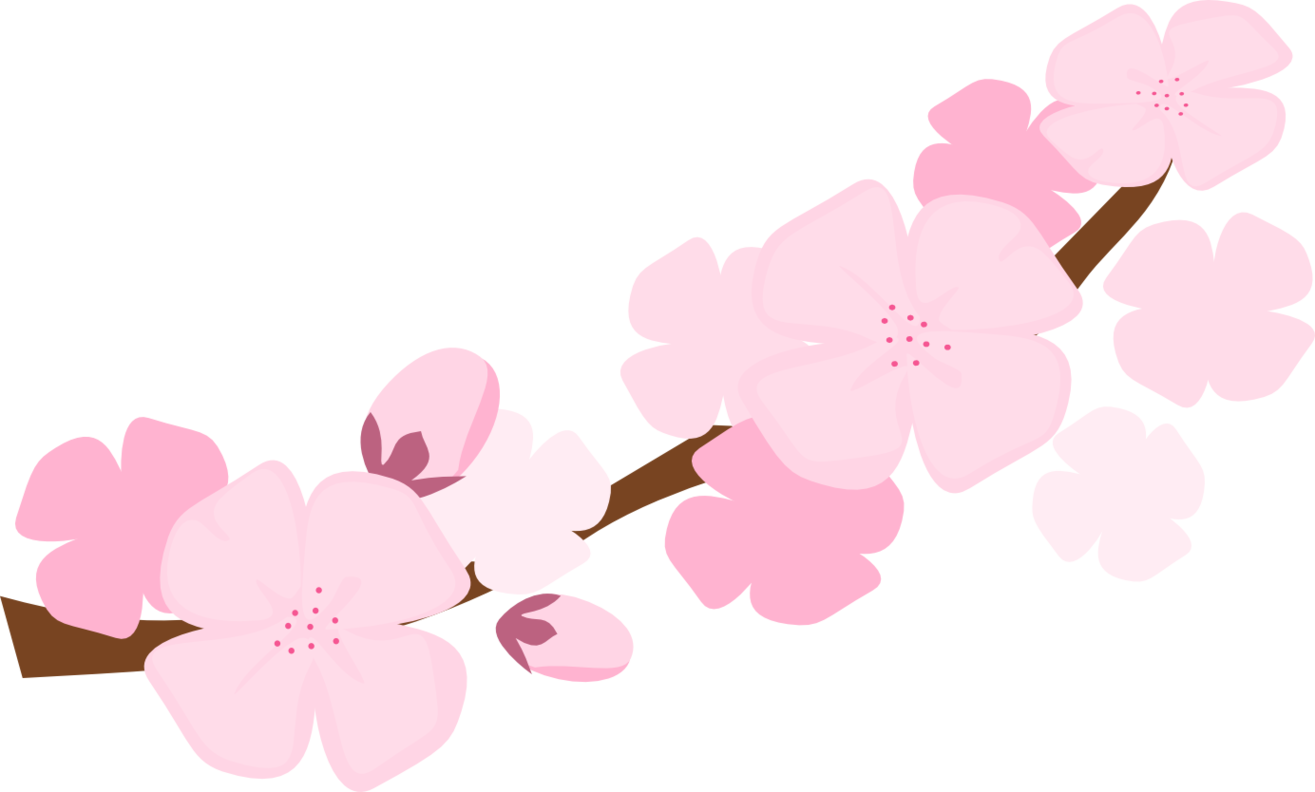 Cherry blossoms falling png. Collection of blossom