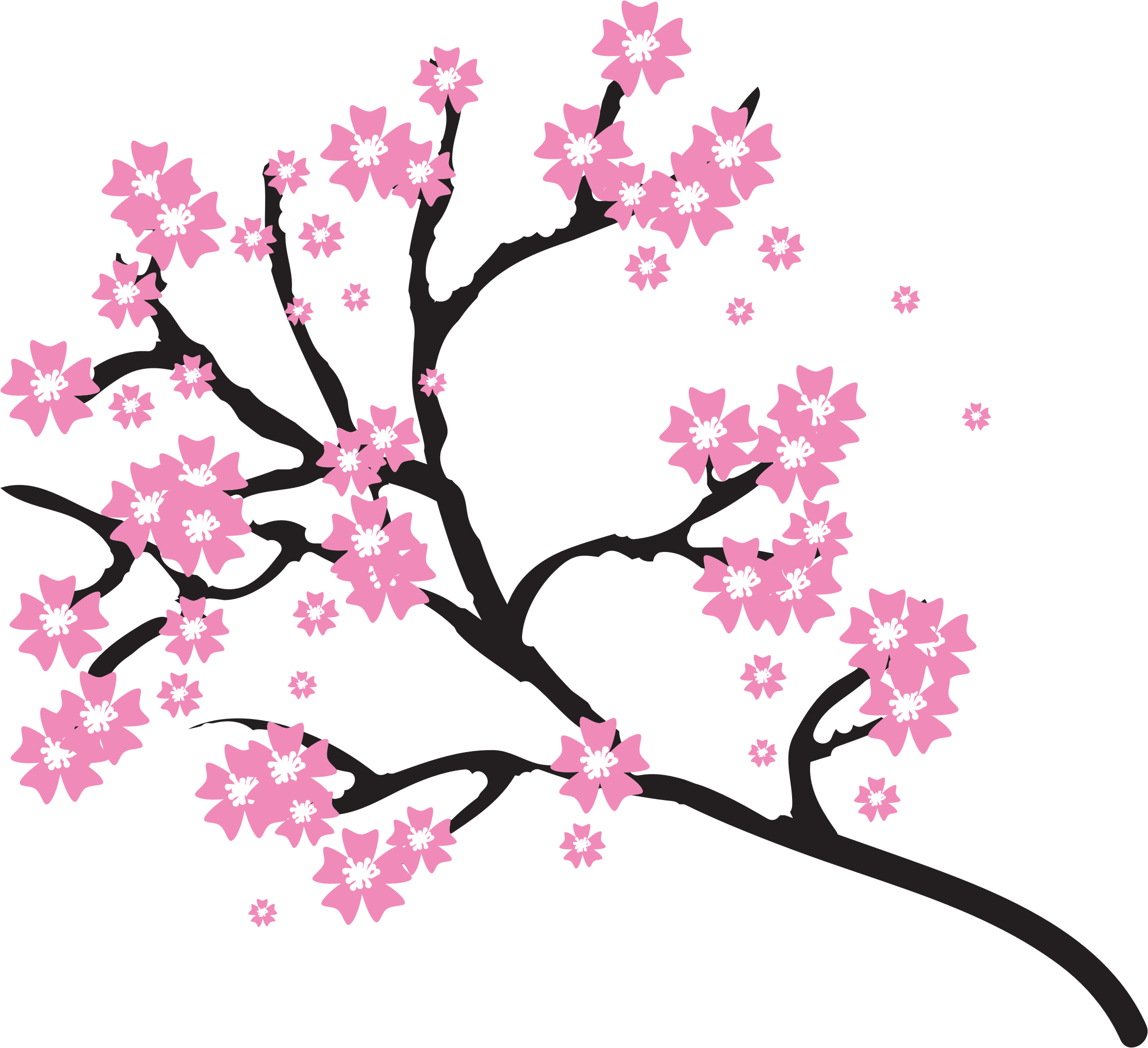 Cherry blossoms png. Clipart big image