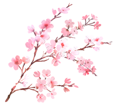 Cherry branch png. Download blossom free transparent