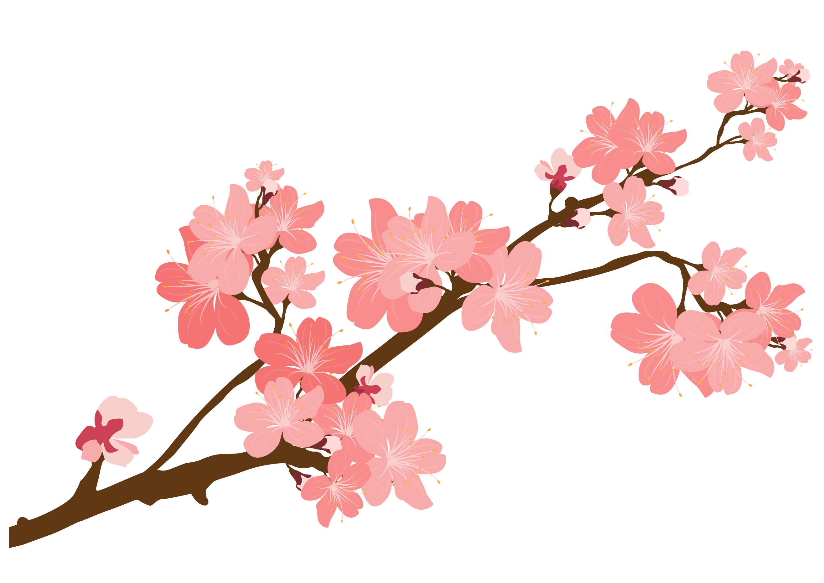 Cherry blossoms png. Blossom sticker clip art