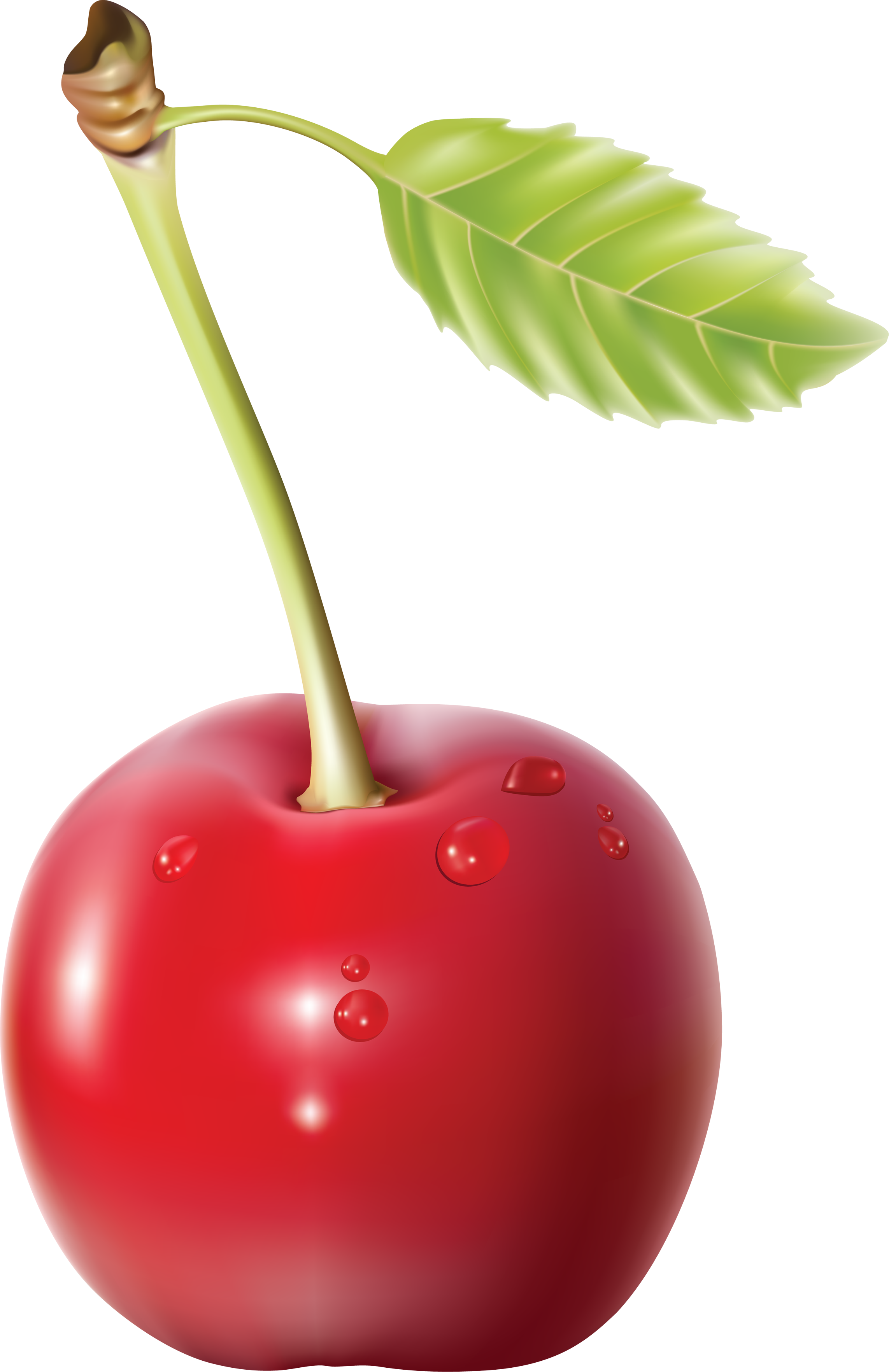 Cherry png. Images free download image