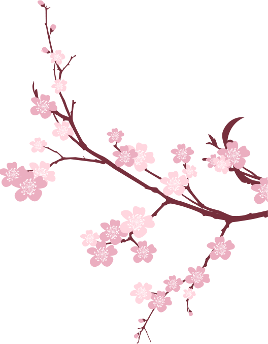 Cherry tree branch png. Japanese flowering picture mart