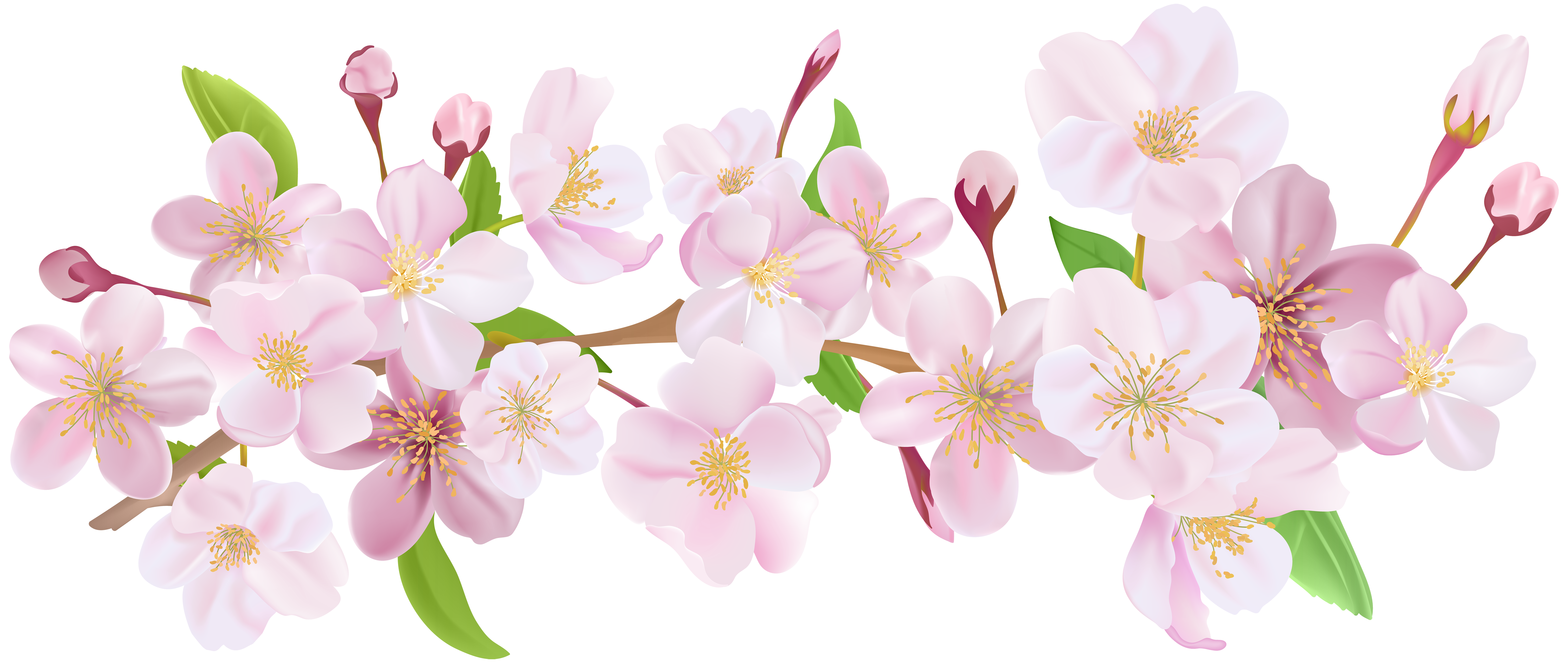 Cherry blossom flower png. Spring branch clip art