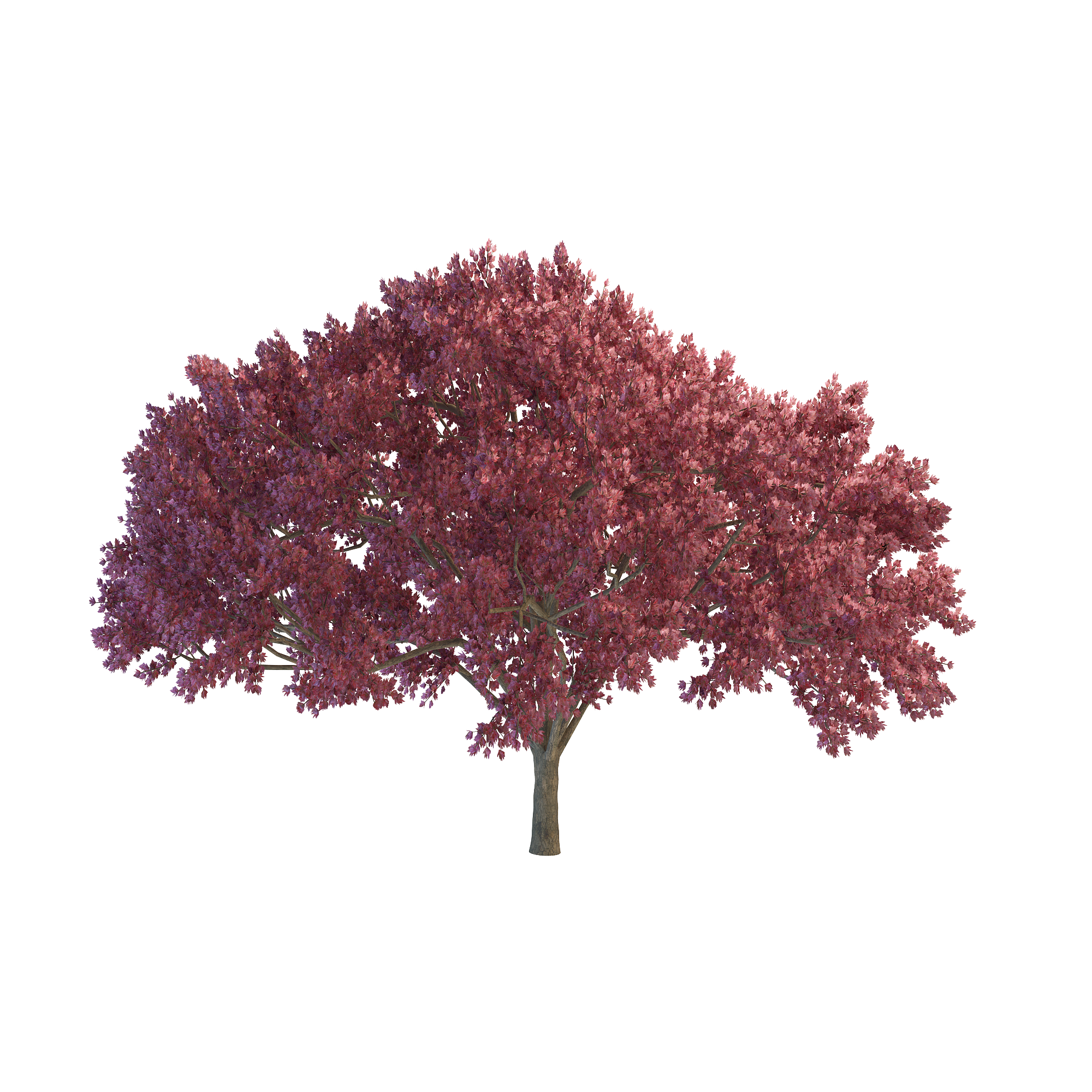 Red tree png. Cherry images transparent free