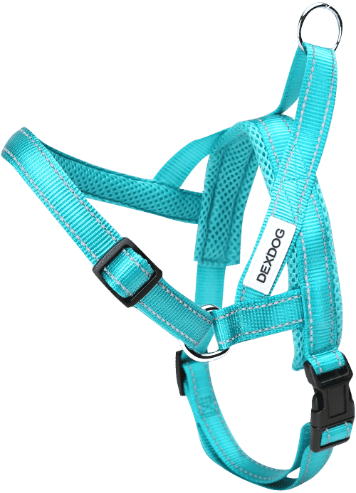 Chest clip harness tie. Dog car harnesses plate