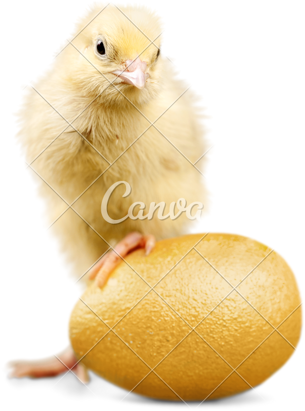 Chick transparent assorted. Easter standing on an