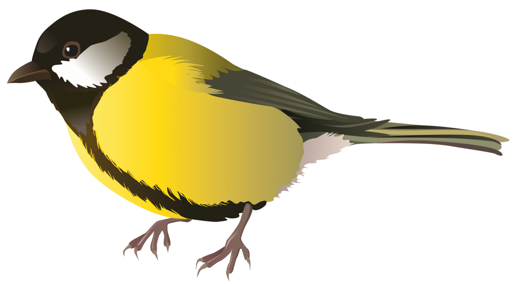 Chickadee vector. Multicolored bird free png