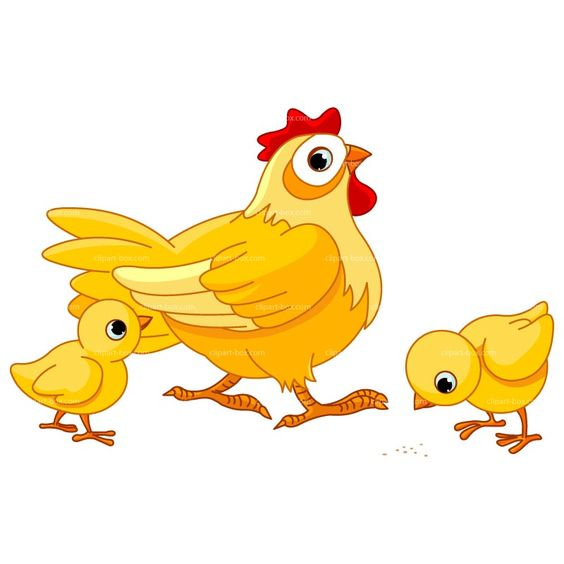 Chicken clipart. Egg at getdrawings com