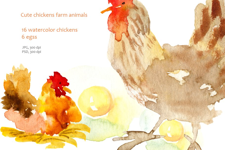 Chicken muzzle. Watercolor clipart illustrations creative