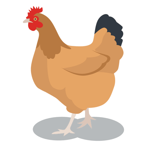 Chicken vector png. Hen feathered animal transparent