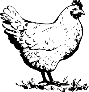 hen vector chick