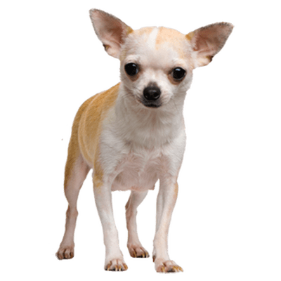 Sad dog png. Puppy face clipart windows