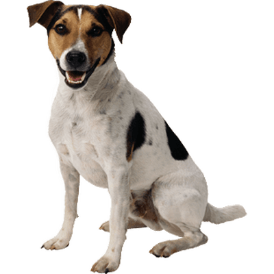 png images of dogs