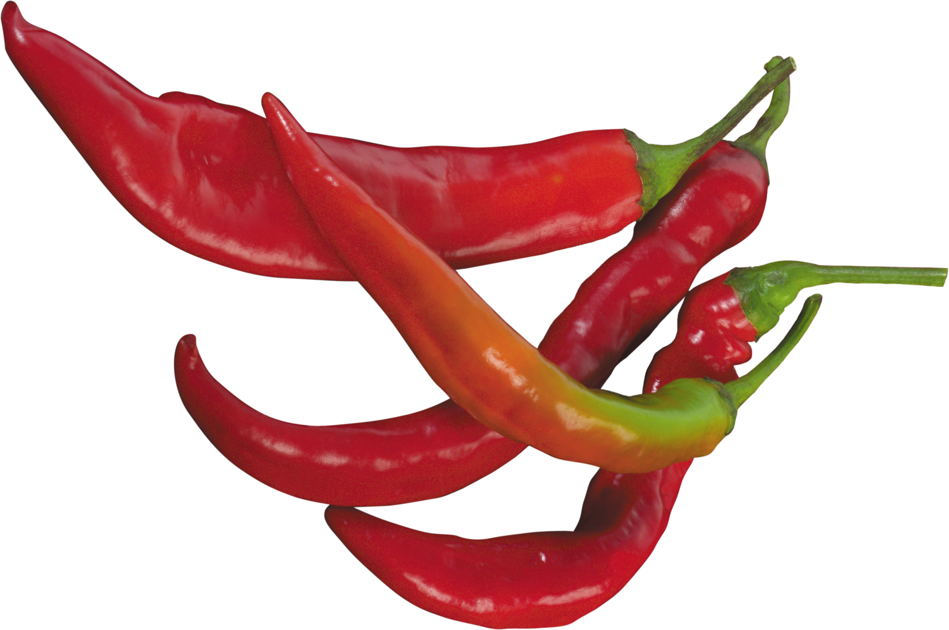 Chili drawing cayenne pepper. Hot two isolated stock
