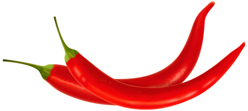 Chili drawing peper. Red peppers png clipart