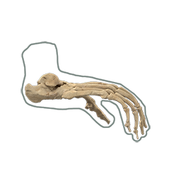 Chimp drawing foot. Hall of human origins