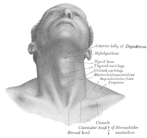 chin drawing neck