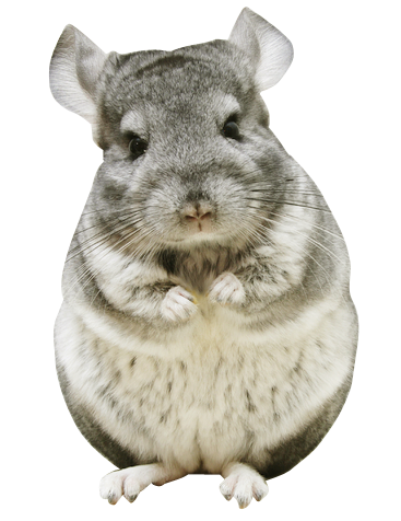Chinchilla footprint png. Happy new year cards