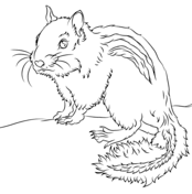 Chipmunk clipart coloring sheet. Chipmunks pages free