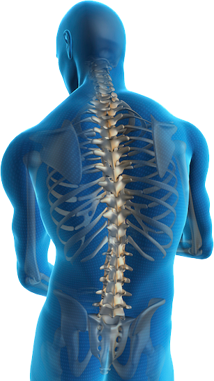 Chiropractic spine png. Why is it that
