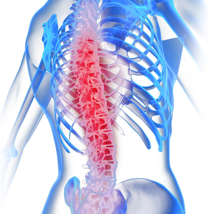 Chiropractic spine png. Chiropractor dublin back pain
