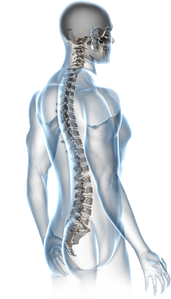 Spine back png. Chiropractic services d brant