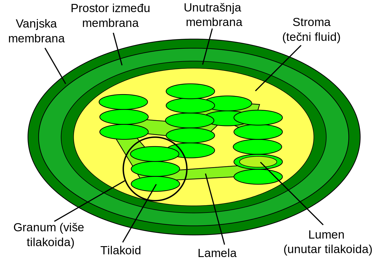 4 Virus Transparent Labeled For Free Download On Ya Webdesign White Blood Cell Diagram Images Pictures Becuo File Bs Plain Chloroplast Part