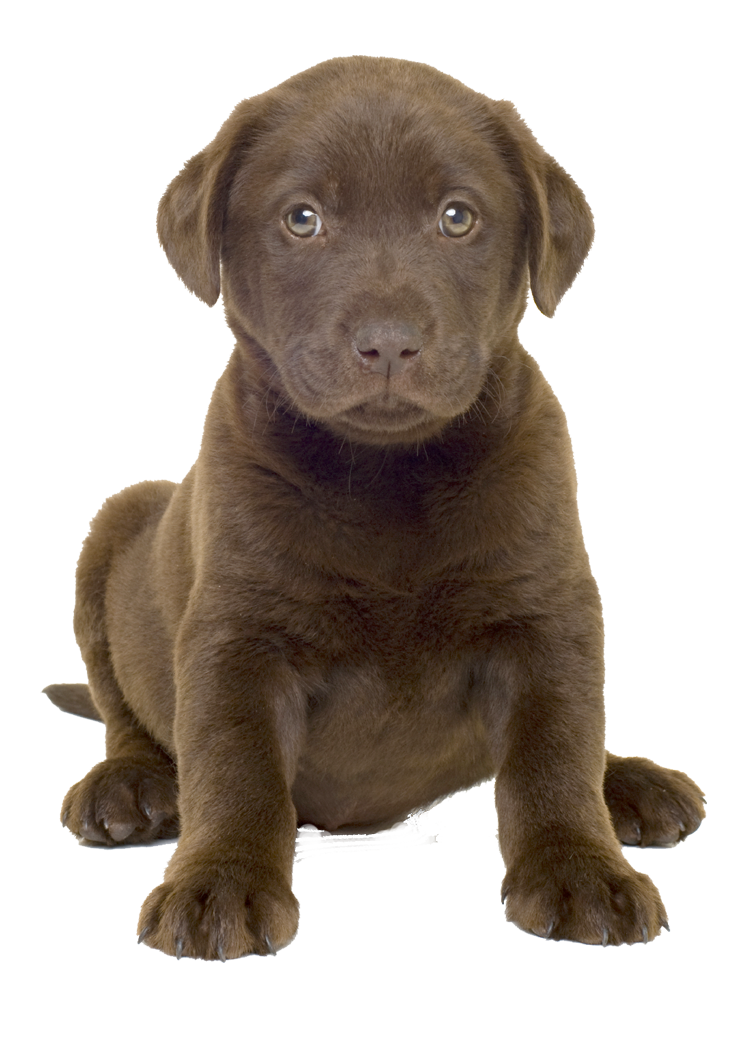 Dog image proppotion animal. Sad puppy png jpg royalty free library