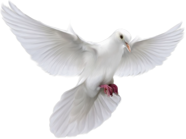 Photo. Christian dove png picture library