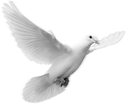 Christian dove png. Images in collection page